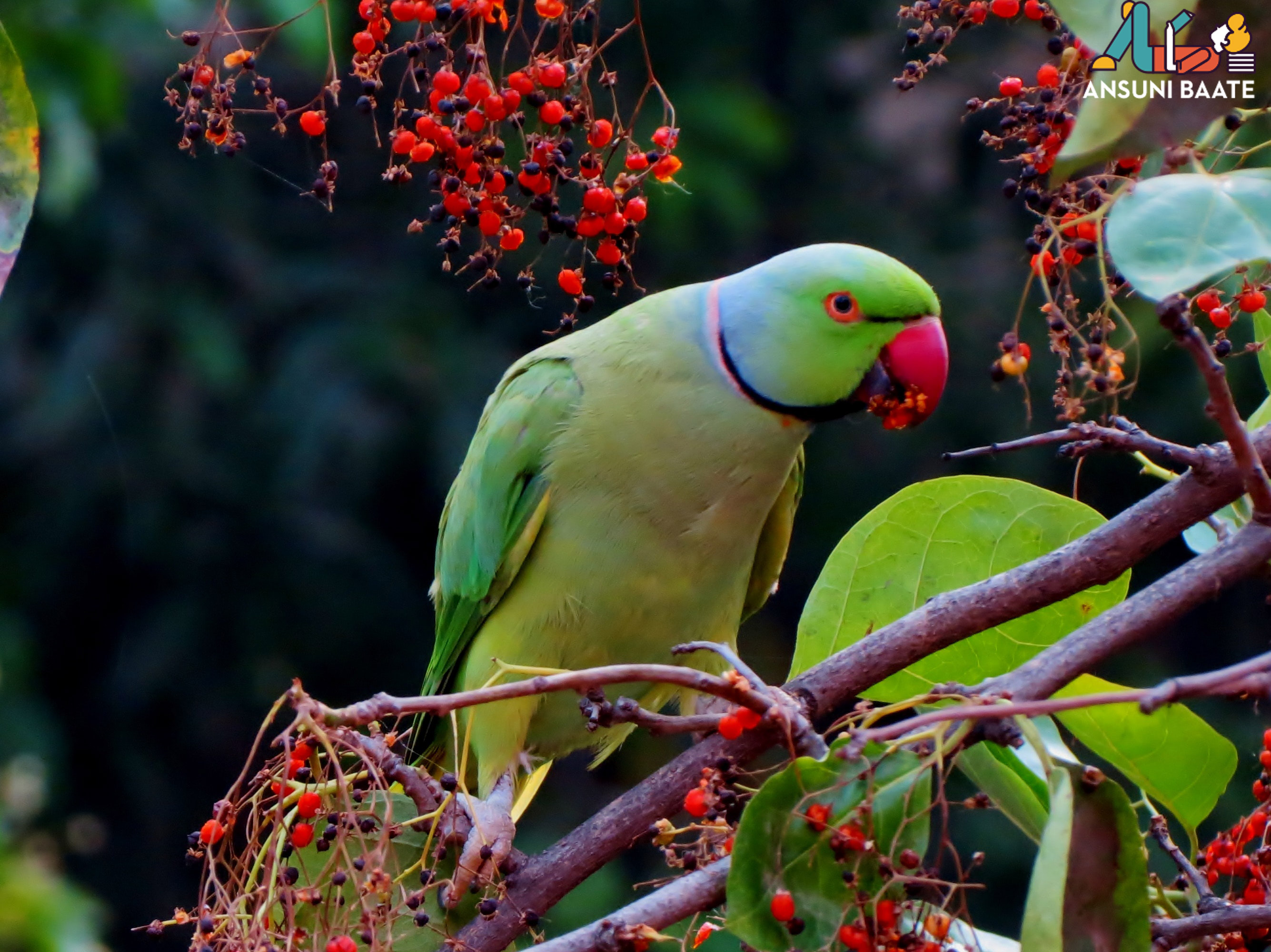 Parrots Pictures HD Photo Wallpaper Free Images Download - तोता की फोटो इमेज वॉलपेपर गैलरी फ्री डाउनलोड