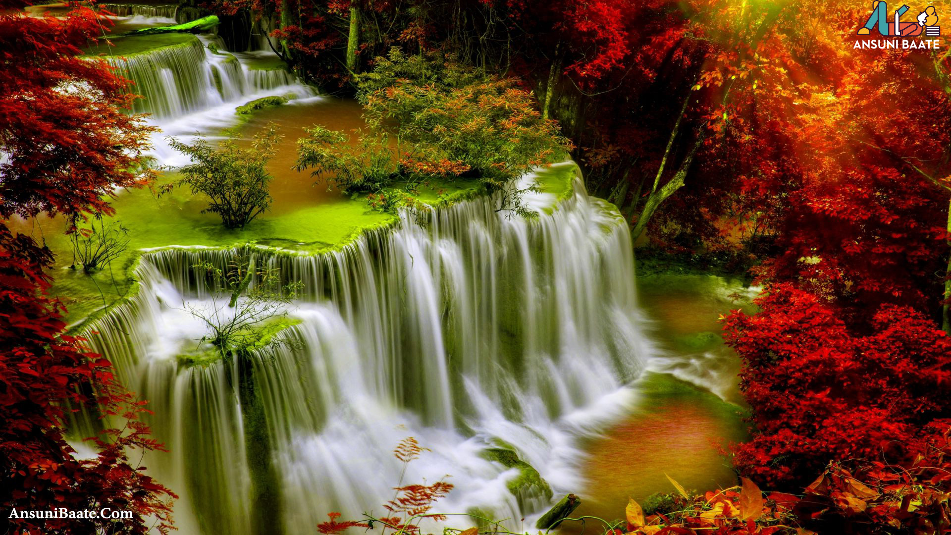 Nature Wallpaper Full HD Gallery Images Photo Free Download