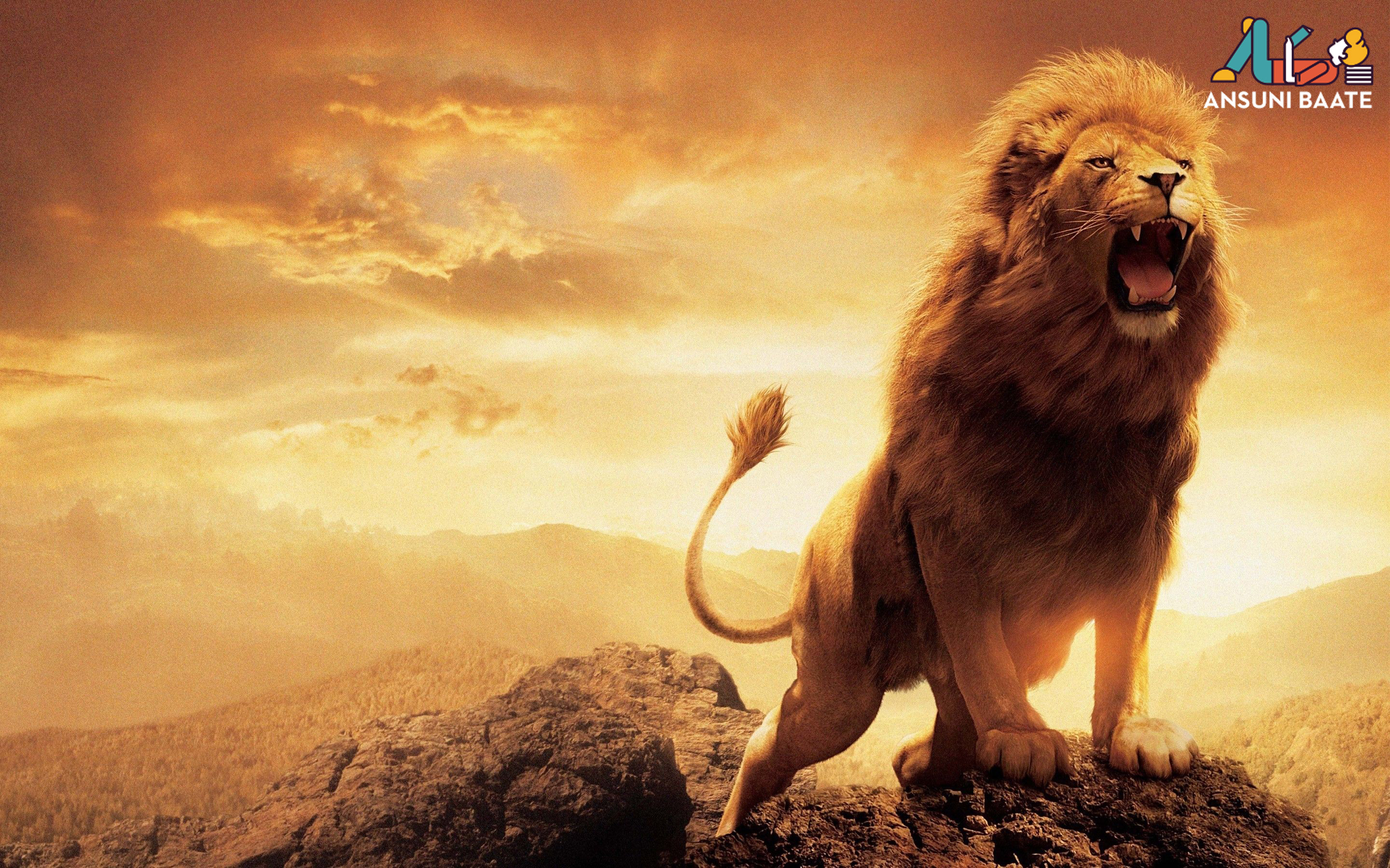 Lion Photos Pictures Image & Hot Pics Gallery Download लायन शेर इमेज